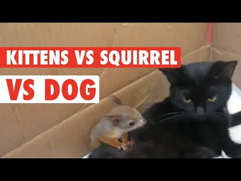 Squirrel Adopted By Cat Family