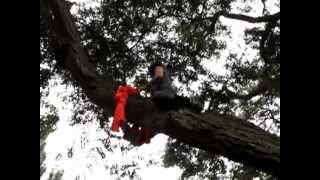 Colgar telas de un árbol