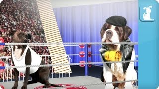 Pet vs Pet Rap Battle Tournament Round 2 / Pitbull vs. Saint Bernard (FO REALZ)