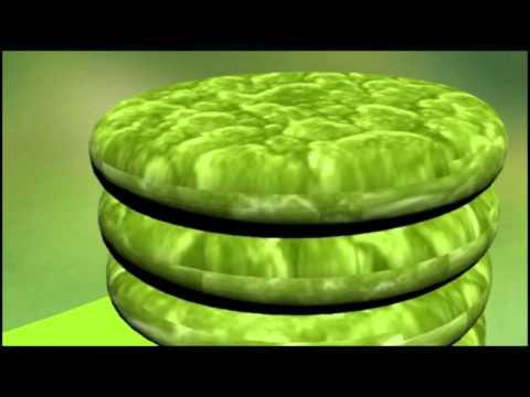 Chloroplast Animation