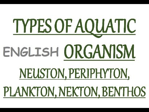 Aquatic Organisms Type - Neuston, Periphyton, Planktons, Nekton, Benthos (In Eng)