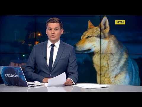 Волки атакуют деревню в Донецкой области