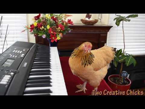 Chicken Plays Operatic Aria on Piano Keyboard