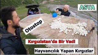 Vadide Hayvancılık Yapan Kırgızlara Konuk Oldum