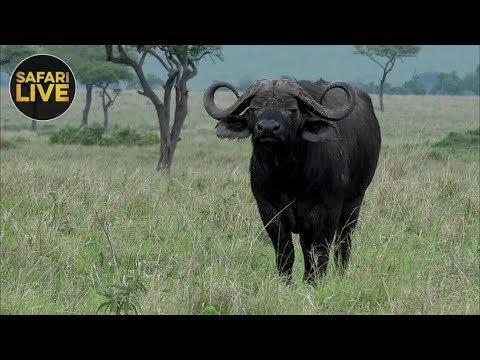 safariLIVE - Sunset Safari - December 18, 2018 - Part 2