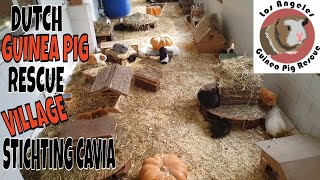 Best Alternative to Guinea Pig Town