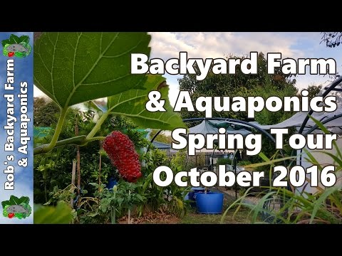 Backyard Farm & Aquaponics Spring Tour Oct 2016 - Solarizing Pest & a Few Changes
