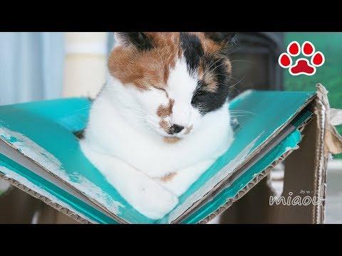疲れへん?変な体勢で休む猫達【瀬戸の三毛猫日記】Aren't you tired Cats resting with a strange posture