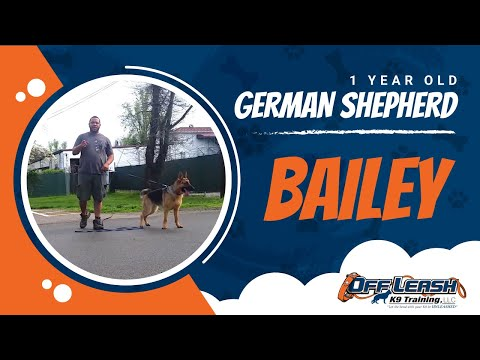 german-shepherd-with-aggression-issues---german-shepherd-dog-trainers