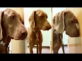 Glasgow Woman Films STONED Dog With Glazed Eyes After Eating Joint(VIDEO)!!!  #USnews