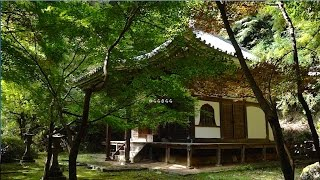 The Garden of Kyoto Konzo-ji Temple 小塩山の中腹にひっそりたたずむ...