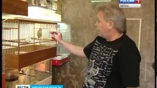 Коллекция птиц Александра Чипуштанова (ГТРК Вятка)
