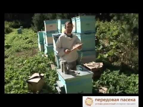 Как правильно ухаживать за пчелами для начинающих видео