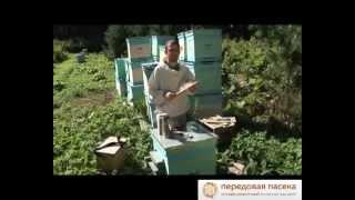 ТОП 10. Советы Начинающему Пчеловоду(Автор видео: