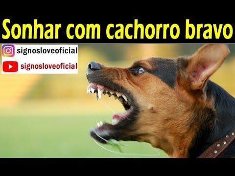 Sonhar Com Cachorro Bravo Significado? Atualizado 2020
