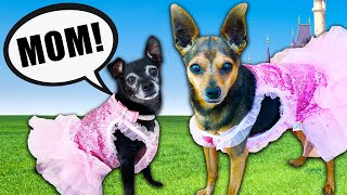 Treating our Dog Like A Princess For A Day! (24 Hour Challenge) PawZam Dogs