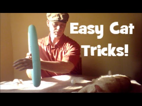 Teach Your Cat Simple, Fun and Easy Tricks!