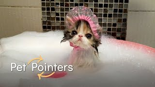 Do's and Don'ts for Grooming Your Pets   Pet Pointers