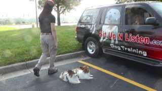Dog Training: Advanced Car Manners, Large And Small Dogs