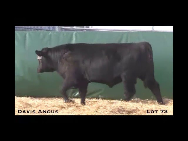 Davis Angus Lot 73
