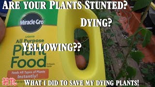 I almost lost everything in the greenhouse and here 39 s why miracle gro