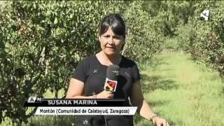 FUEGO BACTERIANO EN LOS PERALES