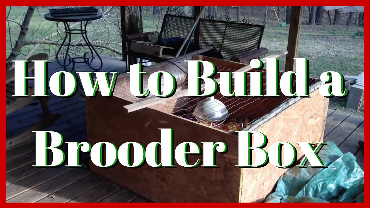 How To Build A Brooder Box That Will Last For Years On