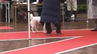 北海道=リン(喜来々・エイト犬舎)