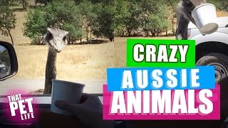 Animals from Australia Are Wild! | Funny Animal Videos Compilation