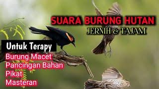 Download SUARA BURUNG DI HUTAN UNTUK BURUNG MACET MALAS BUNYI - kombinasi semua suara burung