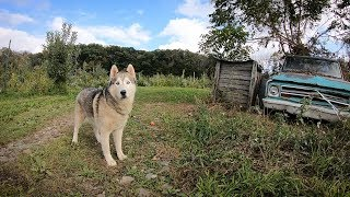Tree-licious Orchards Hosts Husky Foster Program for Rescue Dogs in Port Murray, NJ