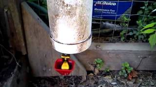 Automatic Chicken Feeder And Waterer