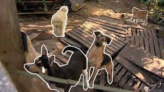 Из-за строительства гостиницы в Ростове закрывают приют для бездомных животных