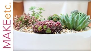 How to plant a succulent bowl - House Plant Tutorial with Isabelle Palmer