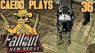 Rex's Brain & Pacer's Bane - Caedo Plays Fallout: New Vegas #36 (Buckaroo Build)