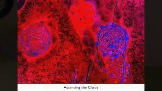 """""""Ascending the Chaos"""""""