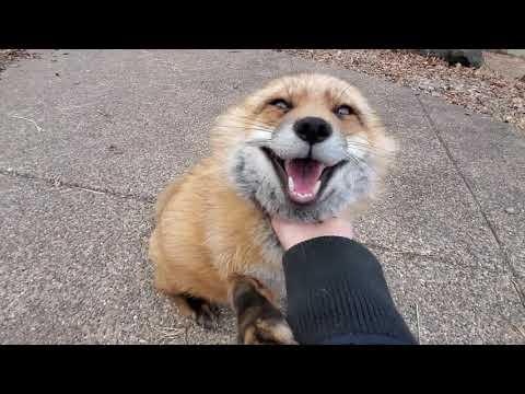Finnegan Fox chats