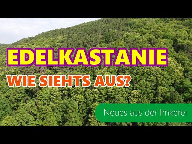 Edelkastanie 2021 | Anreise | Gibt es auch noch Waldhonig | Neues aus der Imkerei | Imkern in Dadant