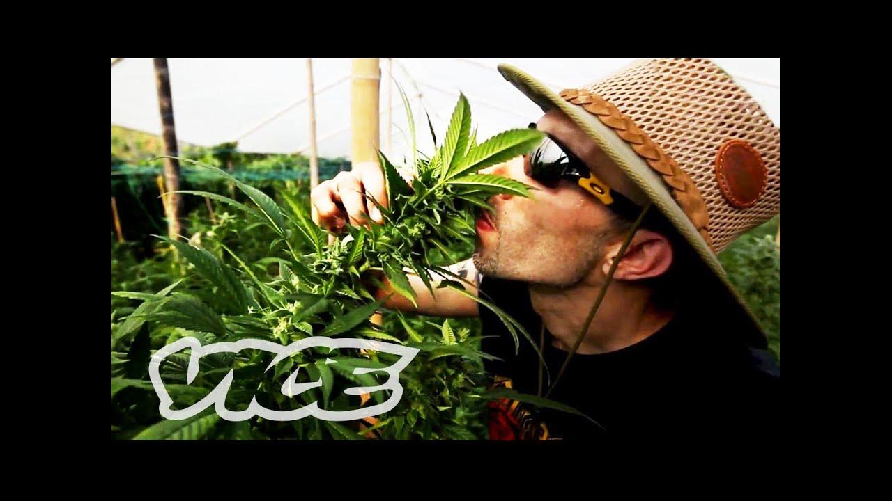 Kings of Cannabis: Part 1/3 (Documentary)