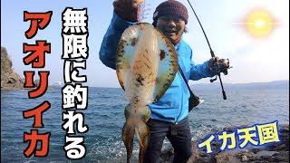 イカが無限に釣れる?イカのパラダイス!!