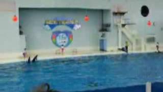 Sea Paradise Yokohama Dolphin Show Thumbnail