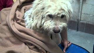A4821469 Lucy | Poodle Mix