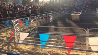Racing and Swimming Pigs at 2016 AZ State Fair