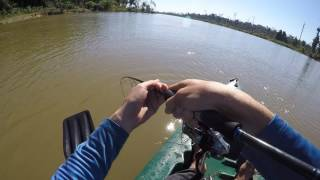 Peixe enorme na pescaria com isca artificial e molinete! Kayak Fishing.
