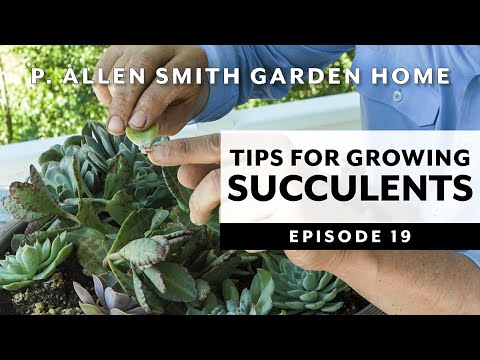 Tips For Growing Succulents Garden Home Vlog 2019 4k Youtube