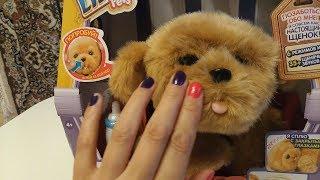 ИНТЕРАКТИВНЫЙ ЩЕНОК моей мечты ЛЮБИМЧИК Little Live Pets ОБЗОР | Interactive Puppy Review