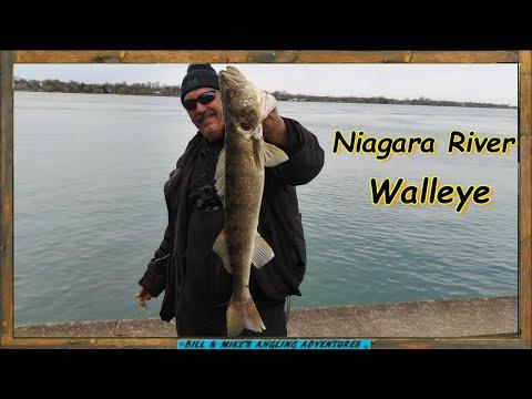 Niagara River Walleye - Shore Fishing