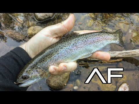 ARIZONA FLY FISHING FOR TROUT AT TONTO CREEK PAYSON!!!