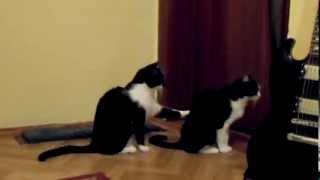 El gato que pide perdón a otro