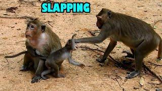 MG! MONKEY AMARA SLAPPING BABY MONKEY MADDEA HEAD, BUT JUST FUNNY WITH BABY MONKEY